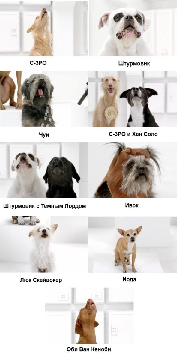 Собачий хор в рекламе Volkswagen